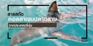 สารสกัดจาก คอลลาเจนปลาฉลามประเทศญี่ปุ่น (Shark fin Collagen Peptide)