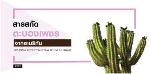 สารสกัดจากต้นตะบองเพชรอเมริกัน (Opuntia Streptacantha Stem Extract)