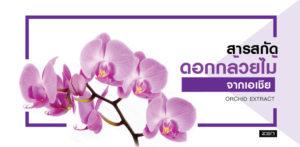 สารสกัดจากดอกกล้วยไม้จากเอเชีย (Orchid Extract)